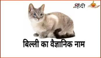 बिल्ली का वैज्ञानिक नाम
