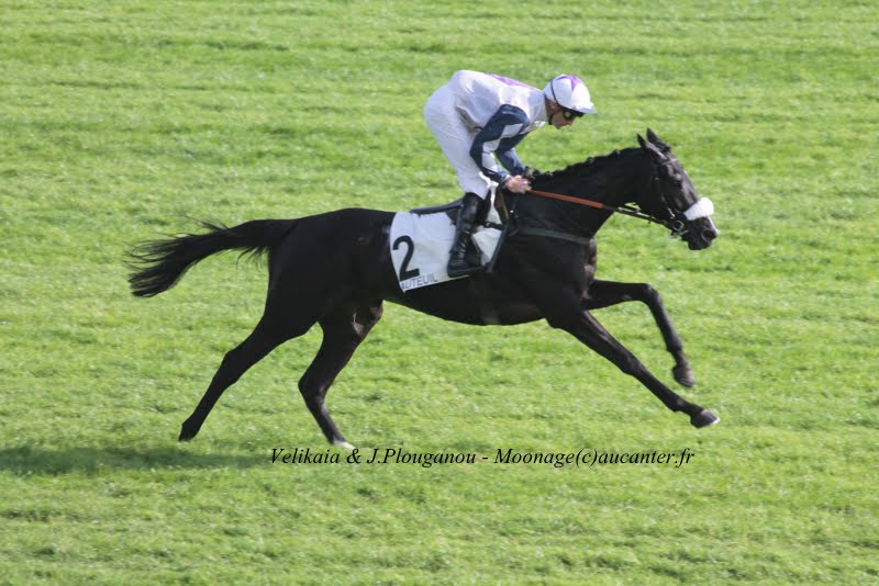 Photos Auteuil 2-11-2014 (48h de l'obstacle) IMG_5195