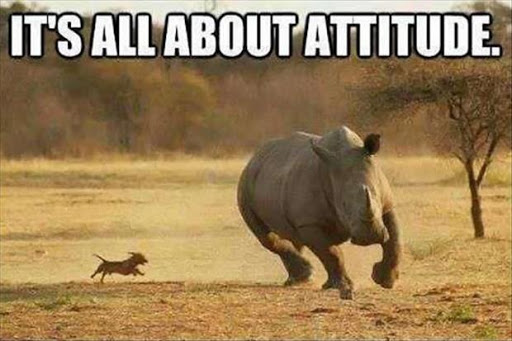 funny-animals-57-2015-06-13-18-00.jpg