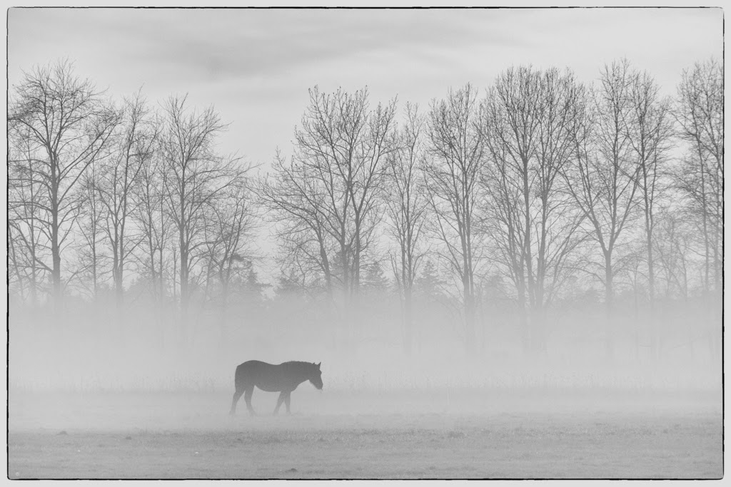 """Horse in Foggy Pasture"" by Tim Snyder -- 2nd Place Digital General ""A"" Group"