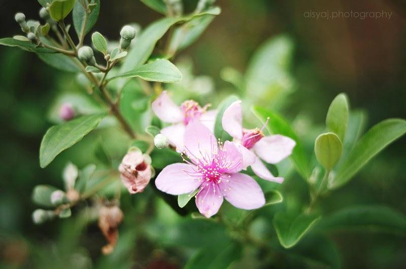 Nature in Miniscule