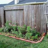 Gardening 2010, Part Two - 101_2157.JPG