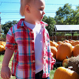 Pumpkin Patch - 115_8219.JPG
