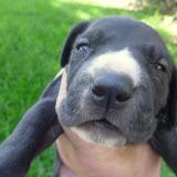 Stella @ 3 weeks