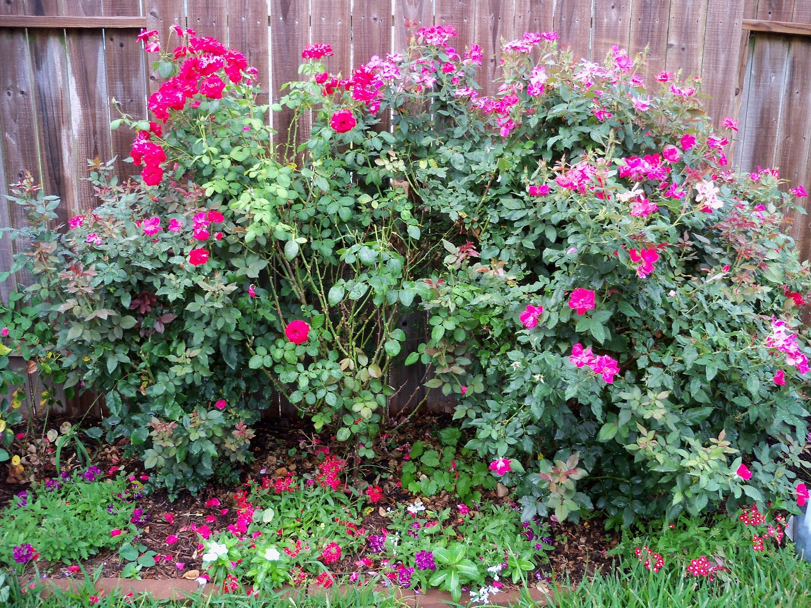 Gardening 2010, Part Two - 101_3193.JPG