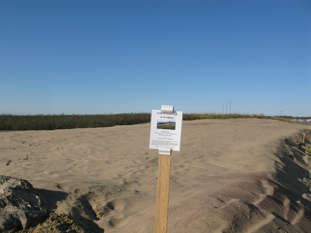 WW Dune, ready for planting