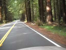 Driving through the redwoods (snapped this one from the sun roof).