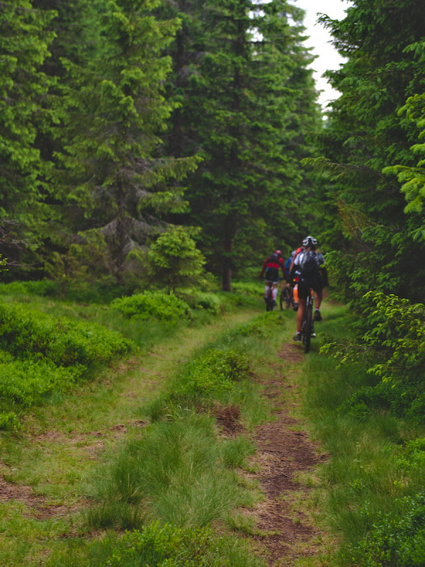 Gasit forestier ciclabil, terminat forestier cu push-bike si tantari.