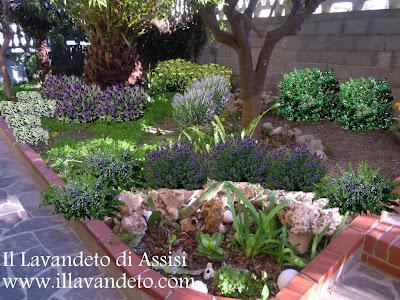 Progetti giardini online gratis progetti giardini privati for Piante aromatiche perenni