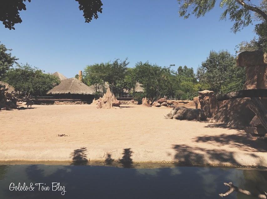 Rinoceronte en Bioparc Valencia
