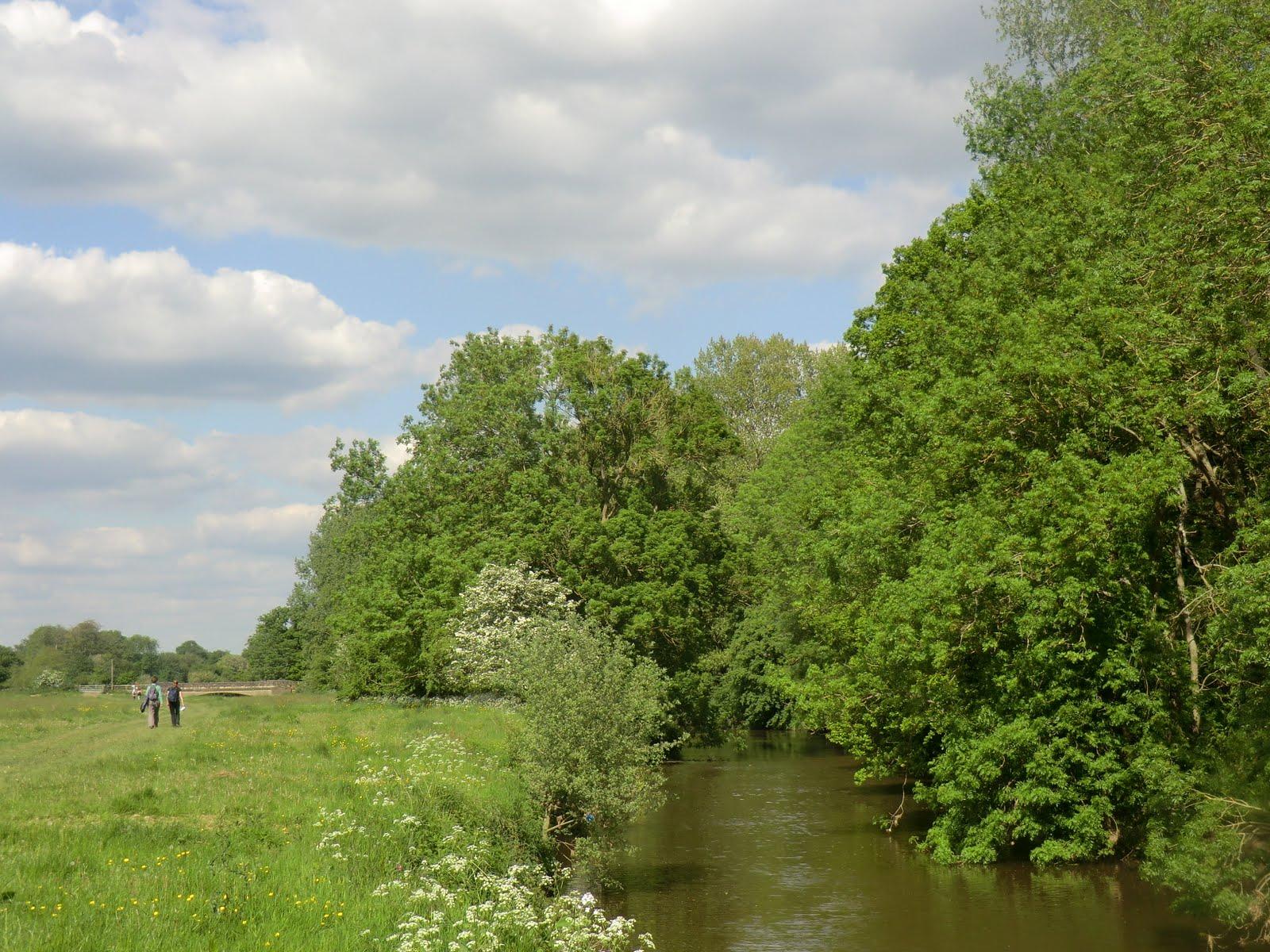 CIMG7128 River Medway