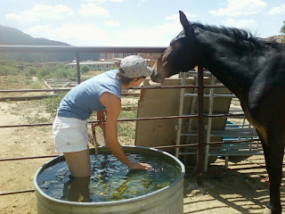 Go swimming with a mule!