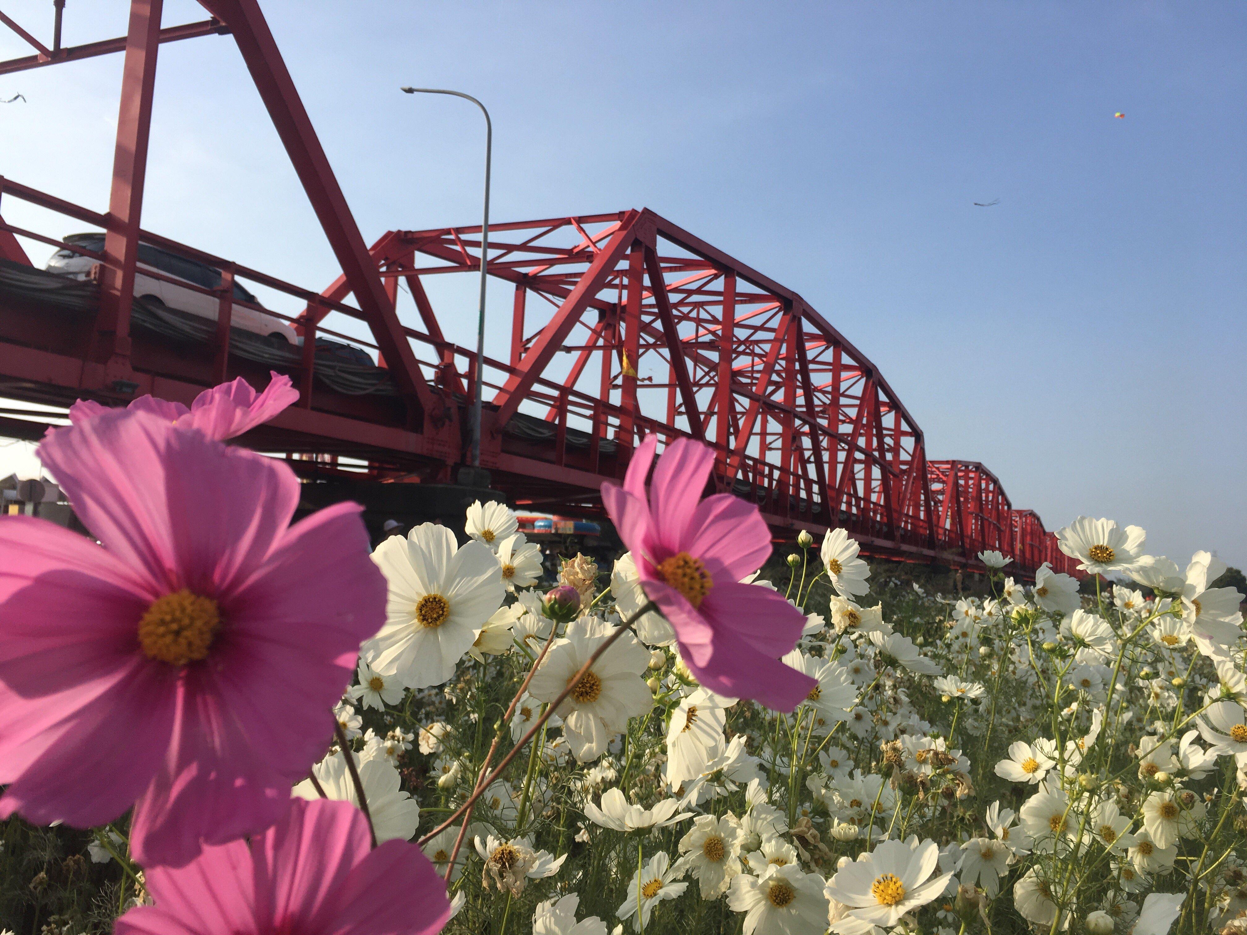 xiluo bridge flowers