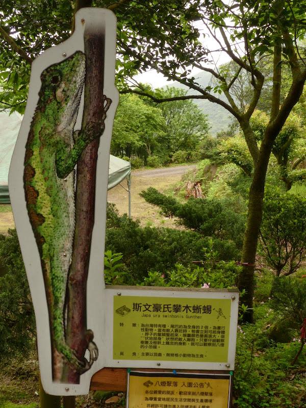 Yangminshan Shitoushan et Jinshan - P1040923.JPG