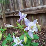 Gardening 2014 - 116_1280.JPG