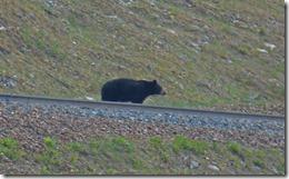 Giant Bear 1