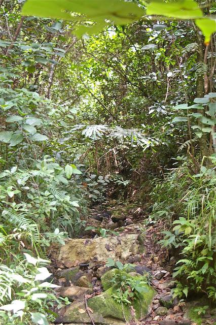 Dans la forêt près de Port Barton : biotope de Trogonoptera trojana. Palawan, 14 août 2005. Photo : J.-M. Gayman