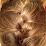 Diane Avery's profile photo