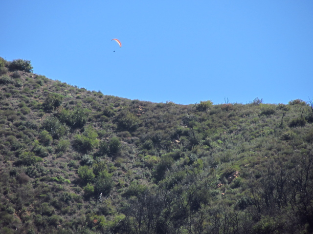 paraglider hanging from his parachute