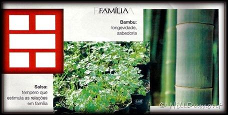 O-baguá-e-as-plantas-02