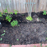 Gardening 2011 - 100_6749.JPG
