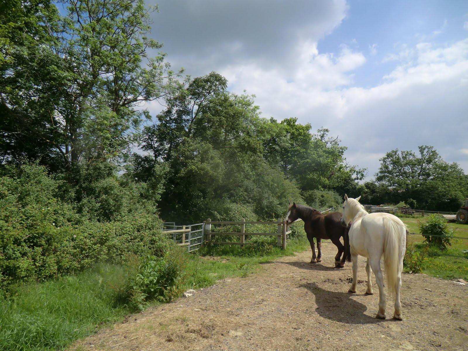 CIMG1793 Horses at Riding School