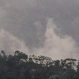 Los Cedros, 1400 m. Montagnes de Toisan, Cordillère de La Plata (Imbabura, Équateur), 20 novembre 2013. Photo : J.-M. Gayman