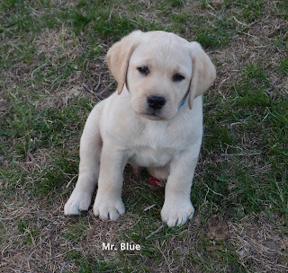 Don't be so serious Mr. Blue.  Raffi at 5 wks.
