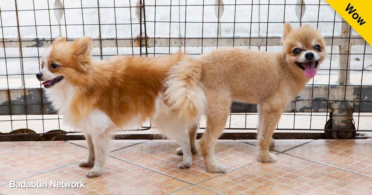 perros pegados celo perro montado separar perros como separar perros