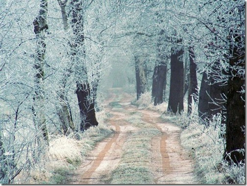 winter road from lili47