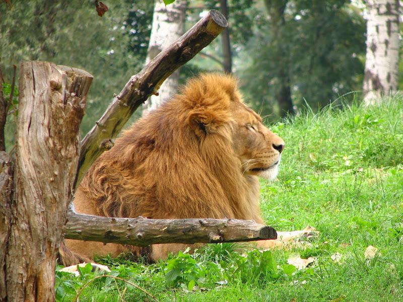 Warszawskie zoo - img_6355.jpg