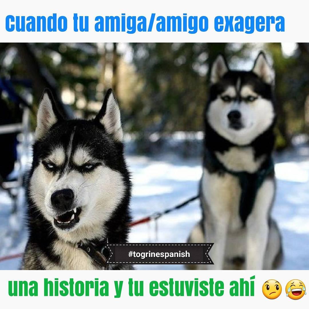 Imagenes-graciosas-2017-para-whatsapp32