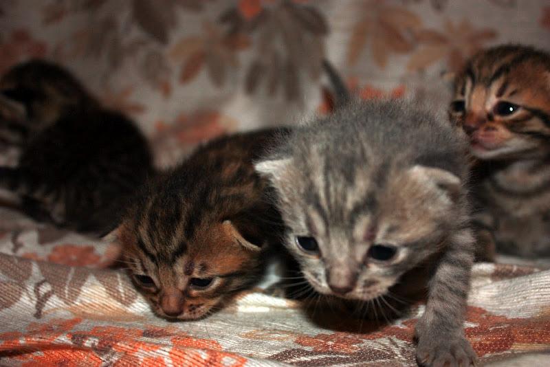 Двухнедельные котята фото
