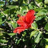 hawaii - 8.jpg