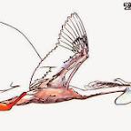 bird - tattoos for men