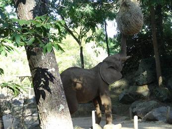 2017.06.17-072 éléphant