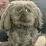 Xavi Hernandez's profile photo