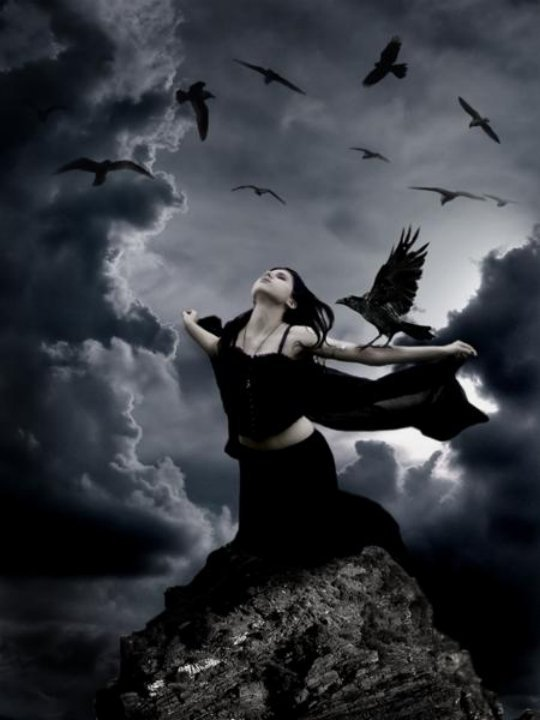 Ravens, Ravens