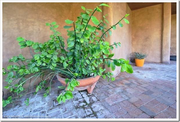 151230_Tucson_Tohono-Chul-Park_0038