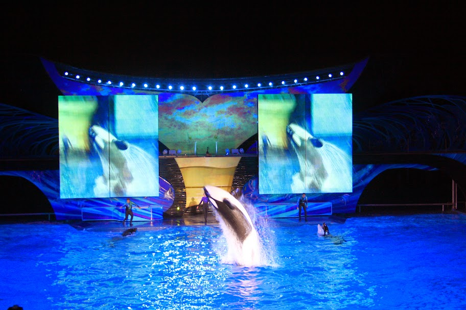 Experience a SeaWorld Summer