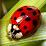 Lady Bug's profile photo