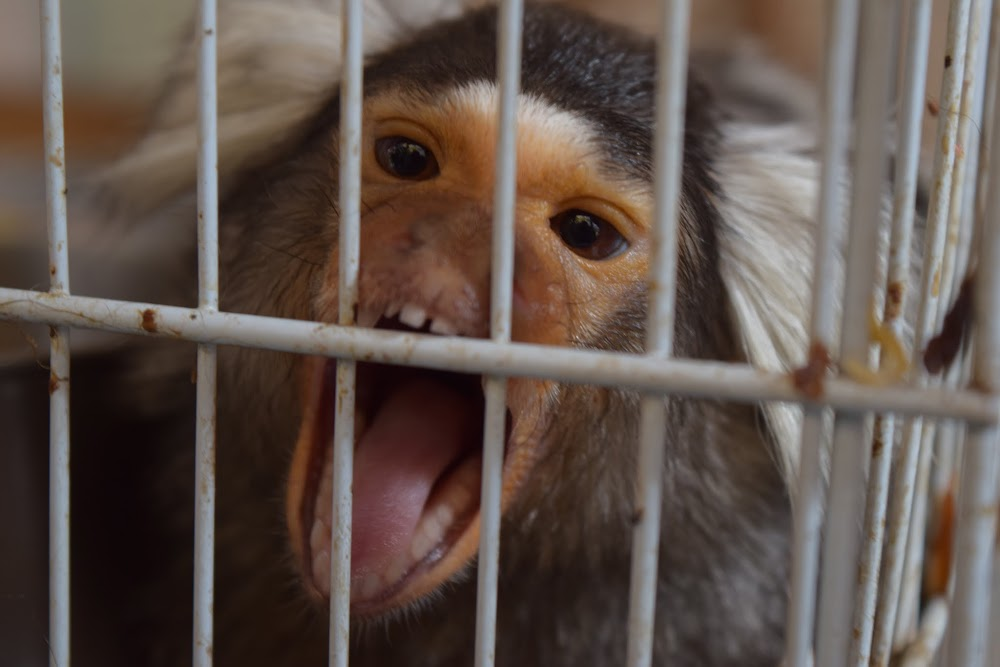 Near our airbnb place in central BKK is a little pathetic caged monkey, who tries to bite me.