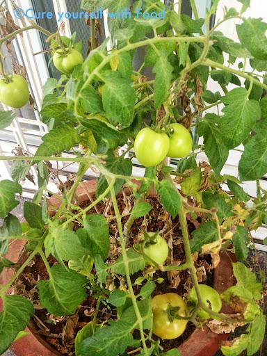 Manasa's Tomato Plant