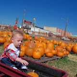 Pumpkin Patch - 115_8259.JPG