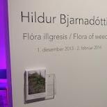 hildur Bjarnadottir at the Hallgrímskirkja in Reykjavik, Hofuoborgarsvaeoi, Iceland