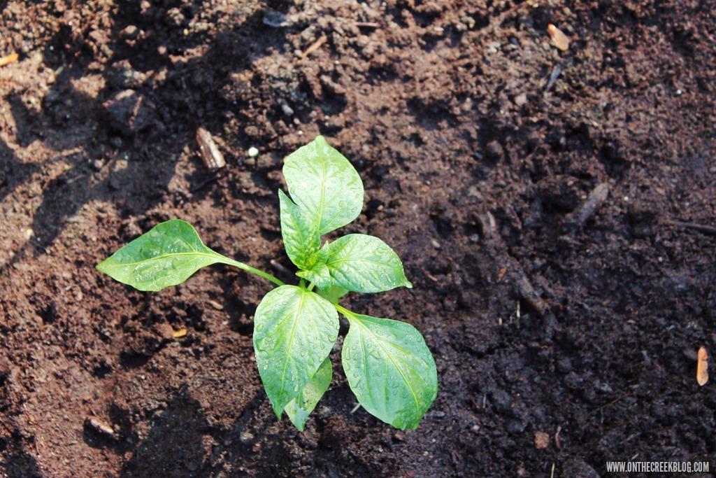 [plants27%5B10%5D]