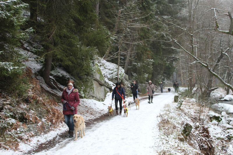 01. Januar 2016: Neujahrswanderung ins Waldnaabtal - IMG_1517.JPG