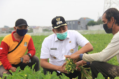 Wawali Bekasi Kaget Petani Genjer Hasilkan 17 Juta Per Bulan