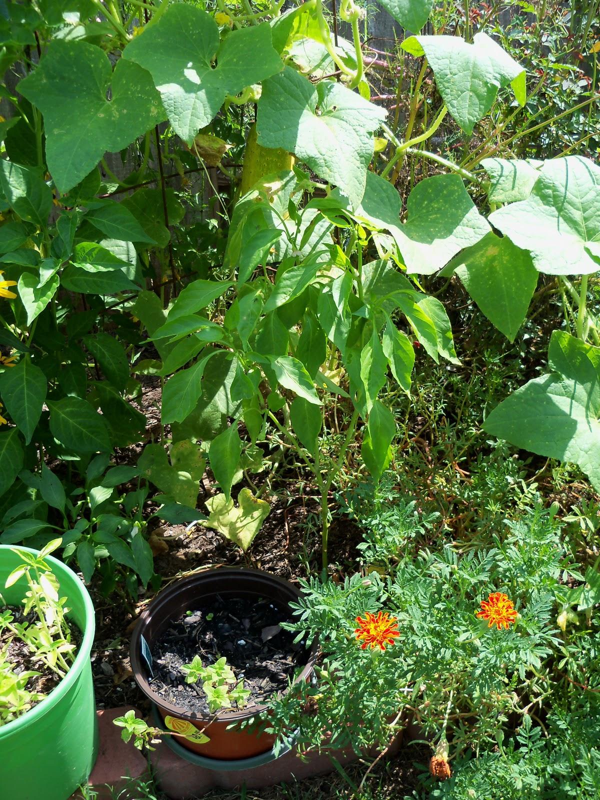 Gardening 2010, Part Three - 101_5106.JPG