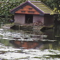 Moorhens on the Pond April 2008